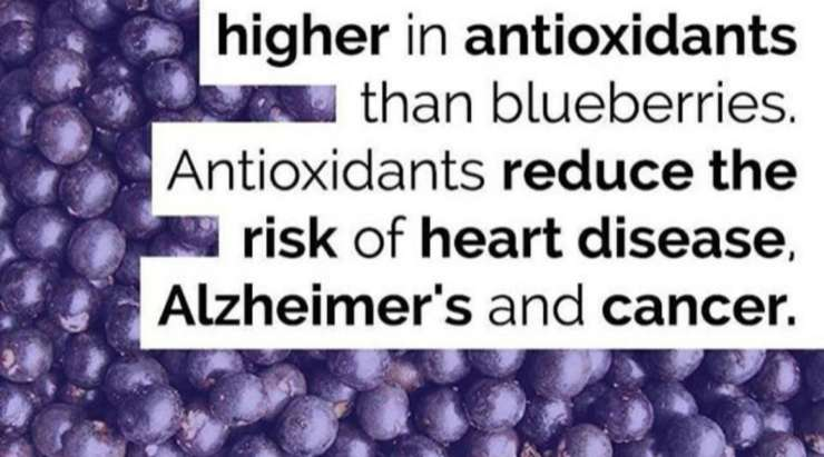 The Benefits of Eating Acai Berries